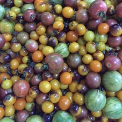 cropped-cherry-tomatoes